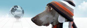 Moving Pets to Australia Quarantine Regulations